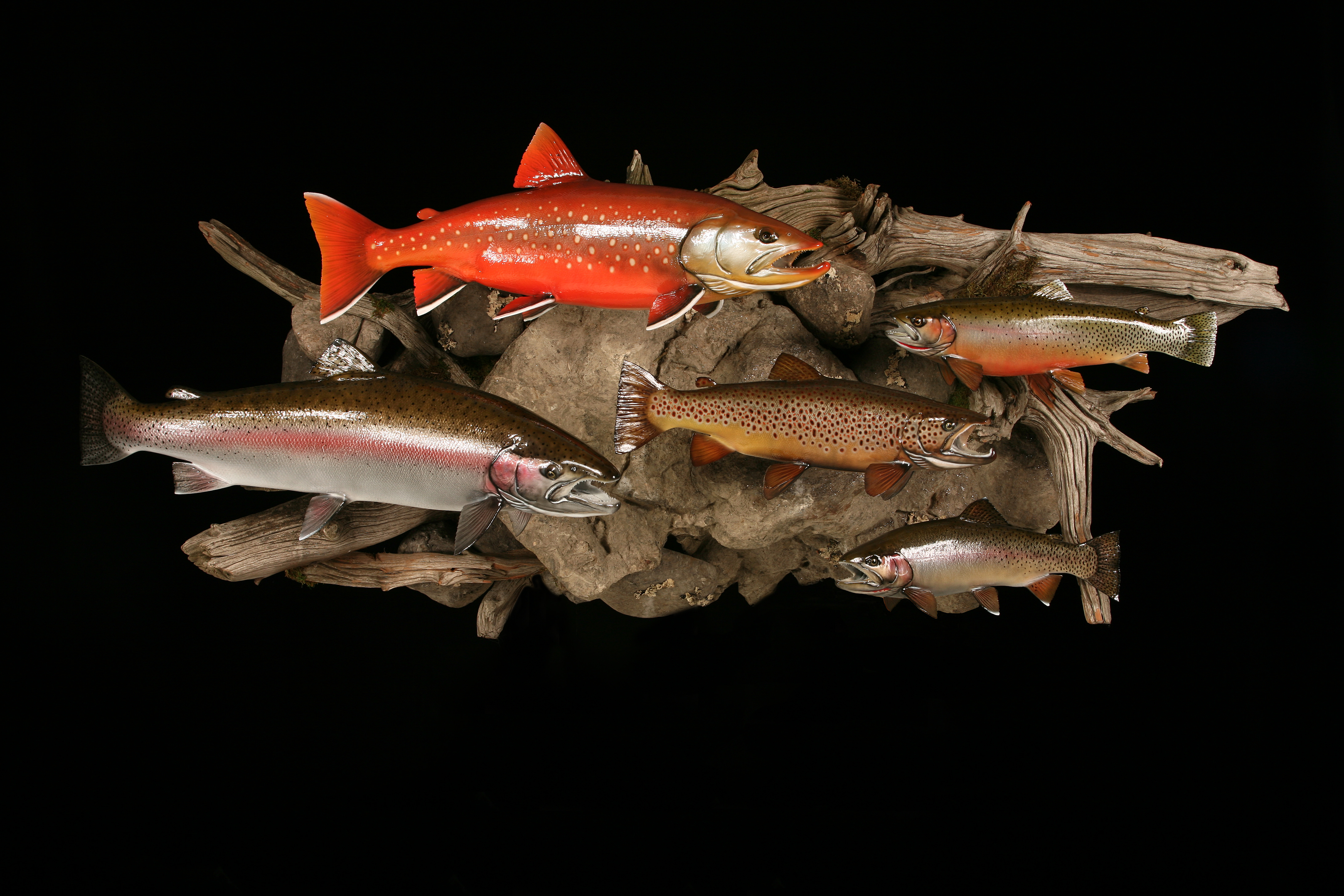Arctic Char - Cutthroat, Brown, Rainbow Trout