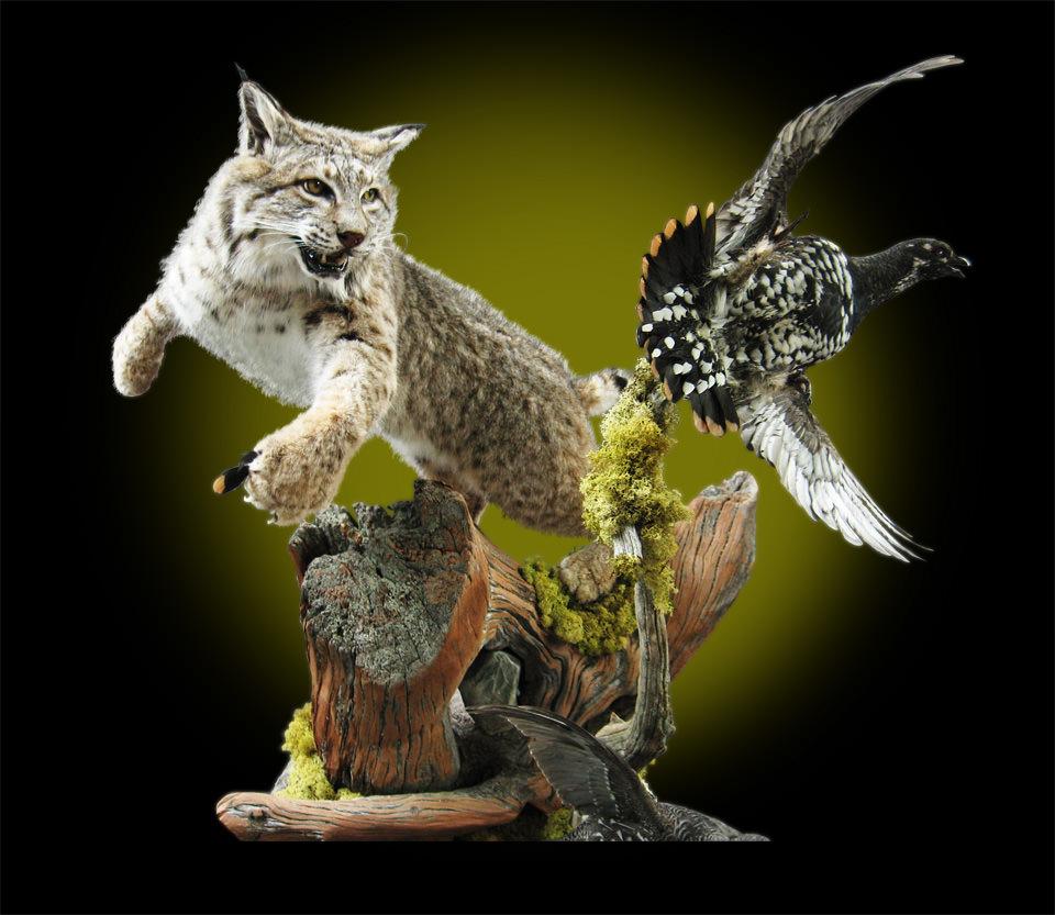 Lynx and Spruce Grouse