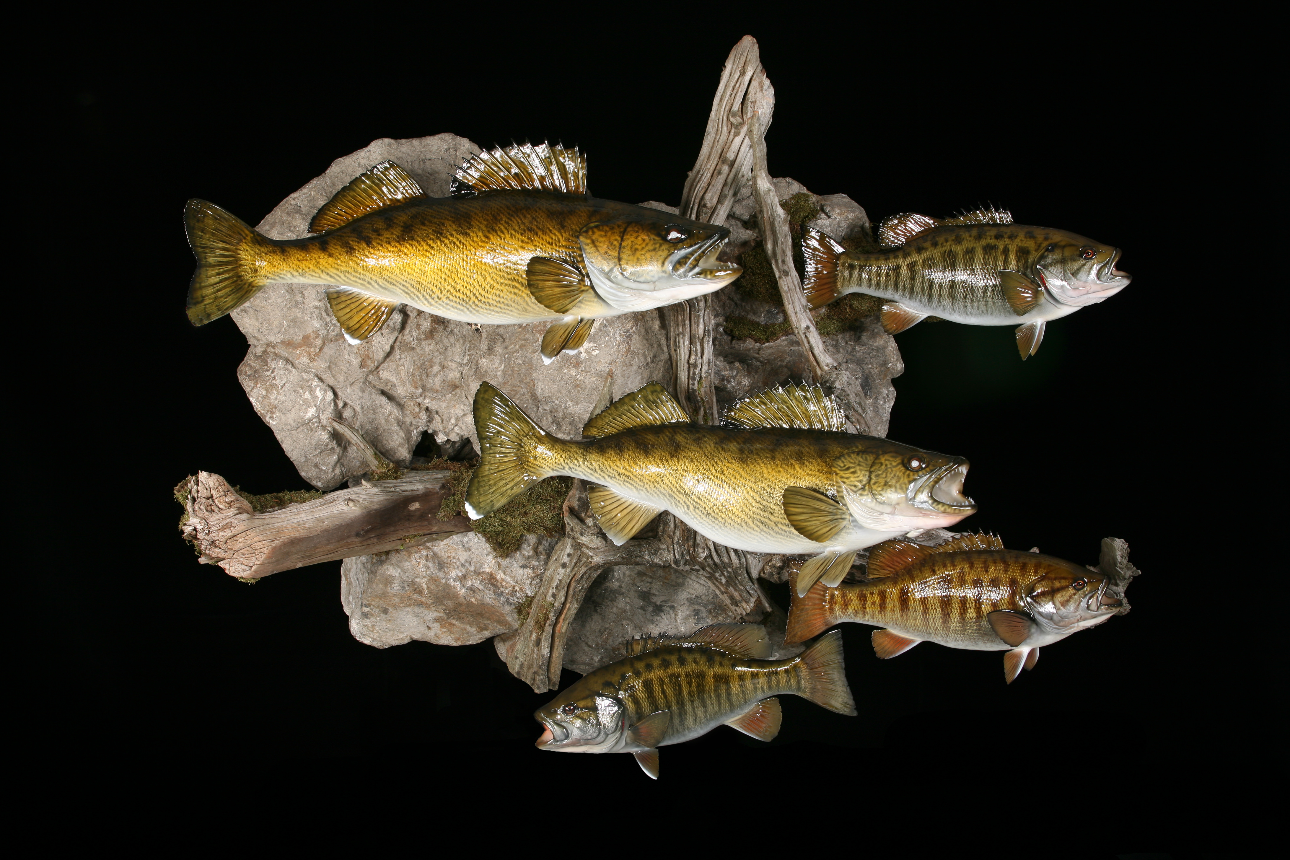 Walleye and Smallmouth Bass