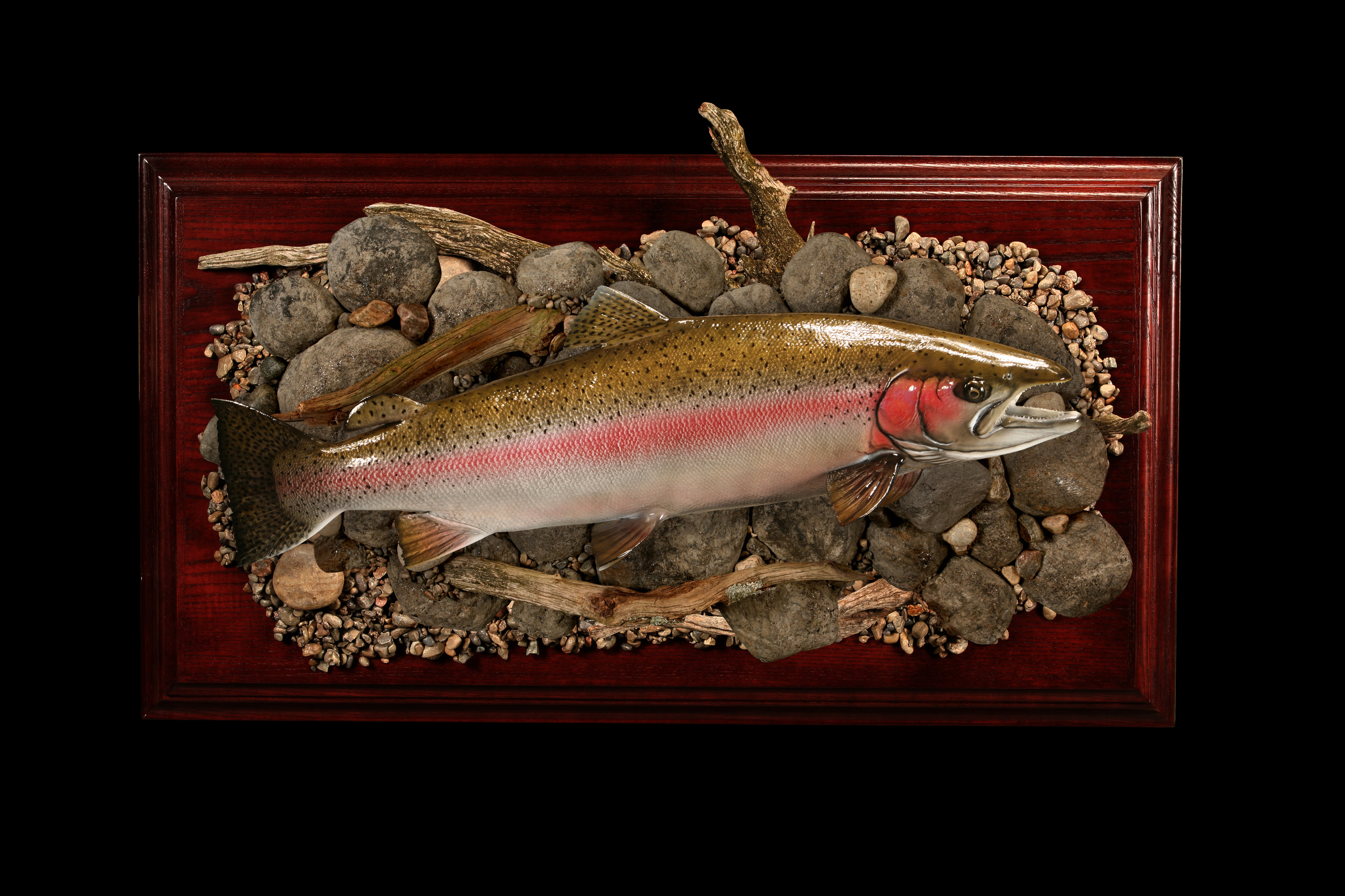 Fish Reproductions & Fish Mounts - Advanced Taxidermy