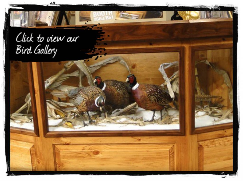 Bird Taxidermy - Gallery